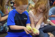 Students enjoy holding baby chicks