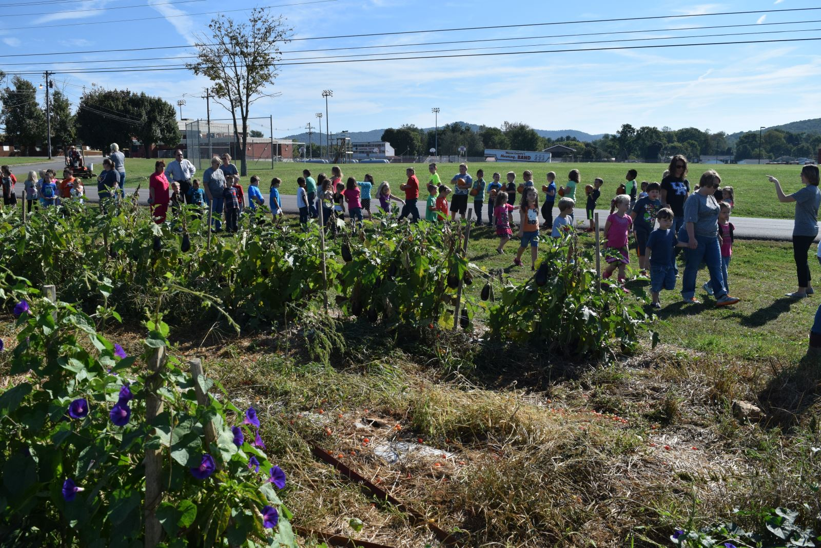 Bell Elementary Students Enjoy Pumpkins Grown In The